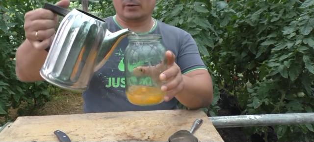 Sbor semyan tomatov