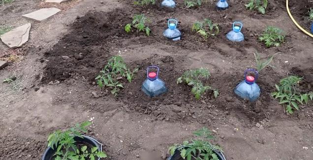 Kapel'nyj poliv iz plastikovyh butylok