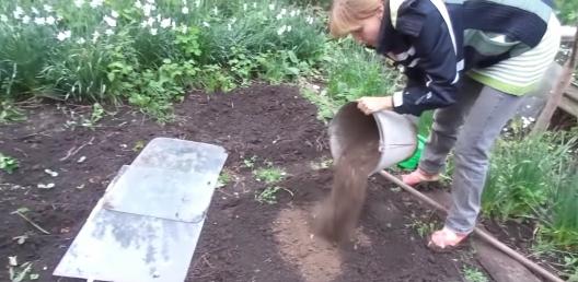 Posadka tykvy semenami v otkrytom grunte